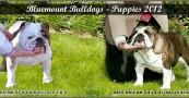 2012 Planned Breedings #2
