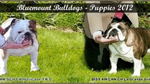 Puppies 2012 #2