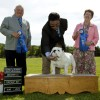 Abegweit Kennel Club Shows