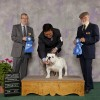 Evangeline Kennel Club Shows