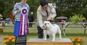 Pictou County Kennel Club Shows