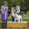 Bobo BEST IN SHOW under very respected Judge Mrs. Patricia Trotter!