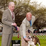 March 19, 2011 - Gogo won WB at the Del Sur Kennel Club (Vallejo, CA) under Judge Mr. Robert Hutton. Handler Jay Serion.