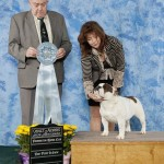 Dora BPIS at Fredericton KC under Judge Richard McCoy (Northern Ireland). Handler Marjorie Ross.