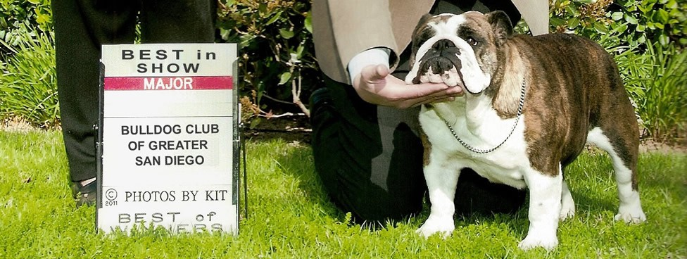 Gogo winning WB, BW and BISS over top specials at the Bulldog Club of Greater San Diego under Breeder-Judge Mrs. Toni Stevens.